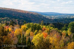 Color, maple trees, Valley, New Brunswick, colour