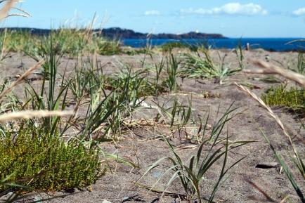Beach The Marsh