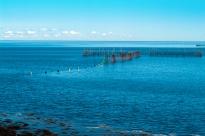 Weir at Whale Cove