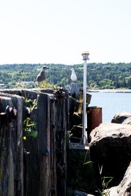 Seagulls on the wharf IMGP7562