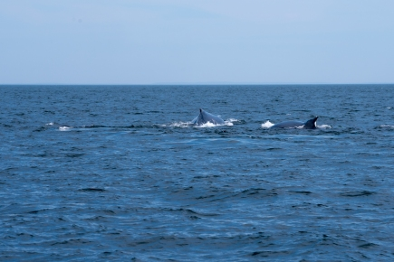 Three Whales playing IMGP7188